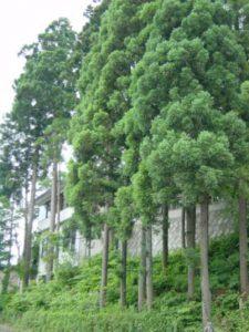 鎮守の森3