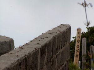 太平山写真16