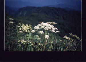太平山写真5